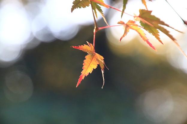 武蔵丘陵森林公園 181127 12