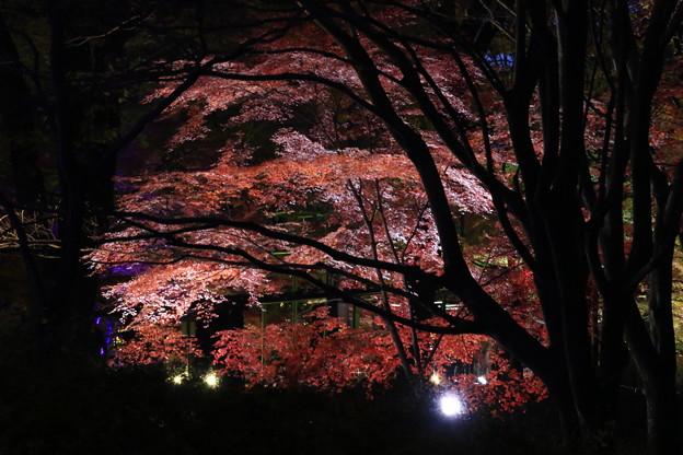 武蔵丘陵森林公園 181127 16