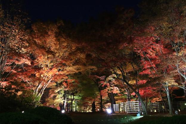 武蔵丘陵森林公園 181127 18
