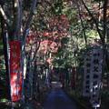 写真: 東郷公園 181130 12