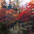 写真: 東郷公園 181130 13