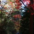 写真: 東郷公園 181130 15