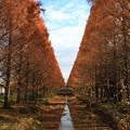 写真: 加須はなさき水上公園 181213 01