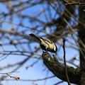 写真: さきたま緑道の野鳥 180322 08