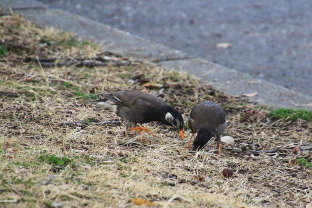 さきたま緑道の野鳥 180322 09