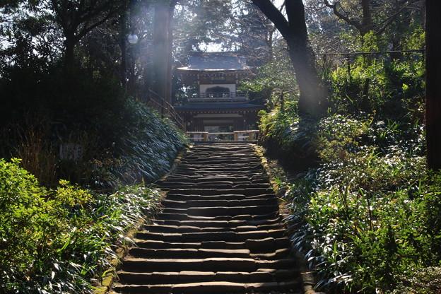 Photos: 浄智寺 190220 02