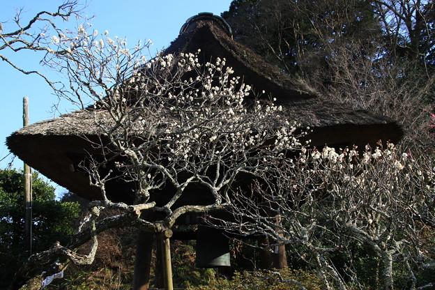 東慶寺 190220 02
