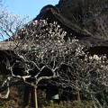 写真: 東慶寺 190220 02