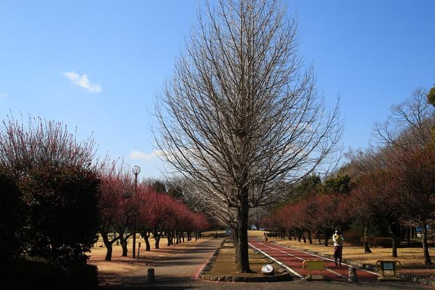 熊谷さくら運動公園 190305 01