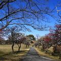 Photos: さきたま古墳公園 190308 03