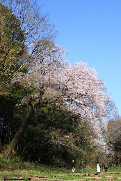 北本自然観察公園 190327 01