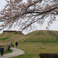 さきたま古墳公園の桜(見頃6日前?) 190329 03