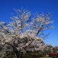 Photos: 岩槻城址公園 190402 04