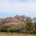 Photos: さきたま古墳公園 190405 01