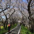 Photos: 吉見町さくら堤公園 190405 02