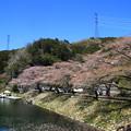 鎌北湖 190416 01