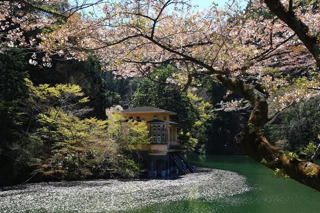鎌北湖 190416 02