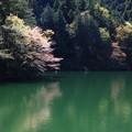 鎌北湖 190416 04