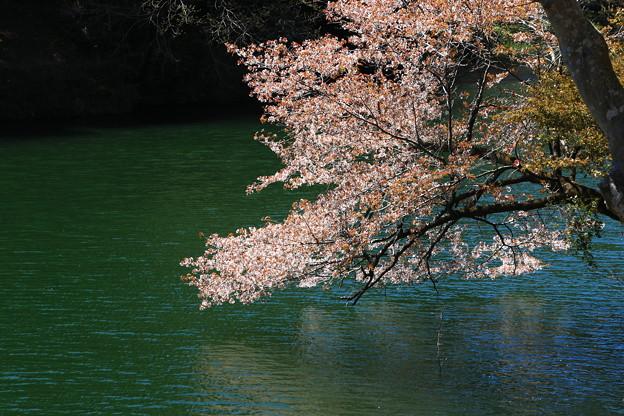 鎌北湖 190416 05