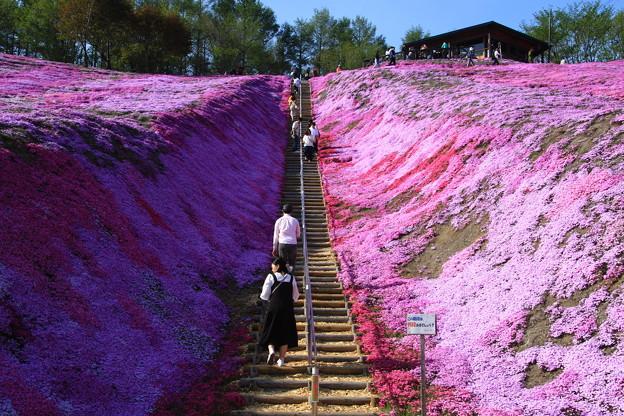 東藻琴芝桜公園 190518 03