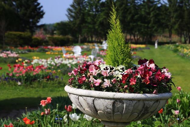 紫竹ガーデン 190519 01
