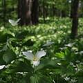 Photos: 六花の森 190520 03