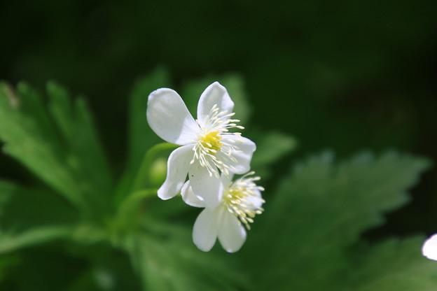 Photos: 六花の森 190520 06