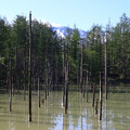 Photos: 青い池 190522 02