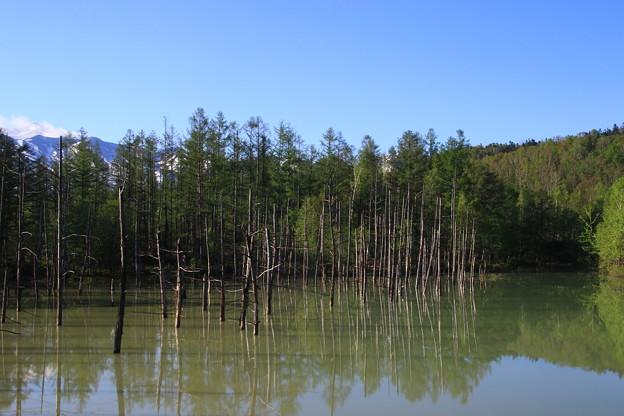 青い池 190522 03