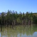 Photos: 青い池 190522 03