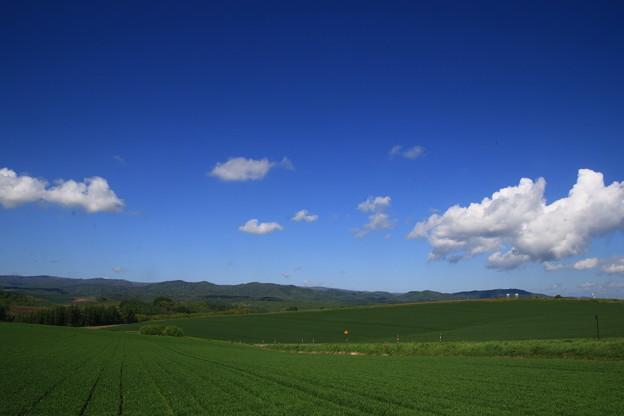 美瑛の丘 190522 04