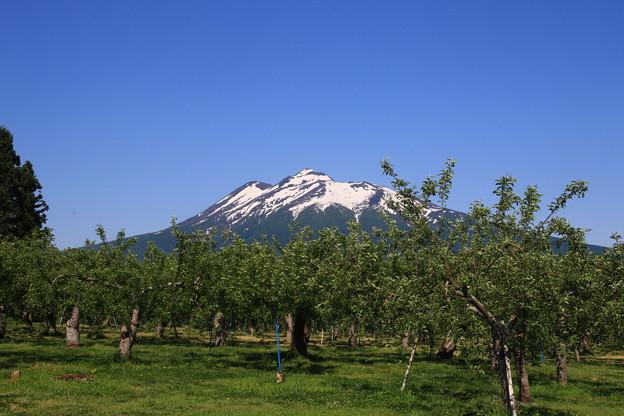 弘前リンゴ園からの岩木山 190525 01