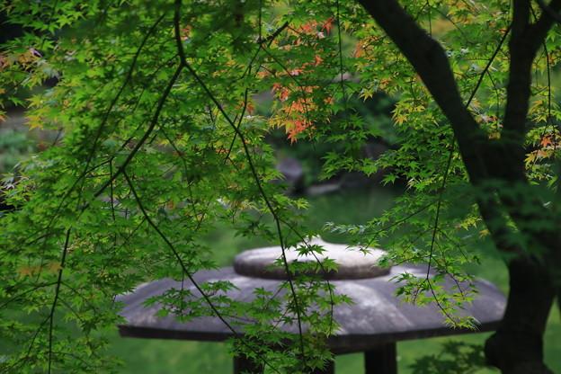 旧古河庭園 190928 05