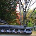 Photos: 忍城 191125 03