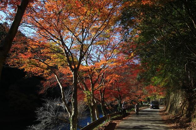 鎌北湖 191130 03