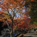 Photos: 鎌北湖 191130 03