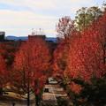 Photos: 金沢城公園 191107 11