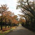 Photos: 金沢城公園 191107 12