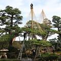 Photos: 兼六園 191107 06
