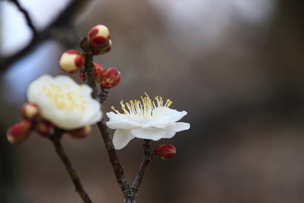 武蔵丘陵森林公園 200204 02