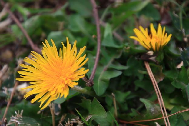 武蔵丘陵森林公園 200204 05