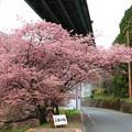 Photos: 河津七滝 200214 09