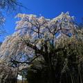 Photos: 普門寺 200324 02