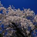 Photos: 普門寺 200324 03