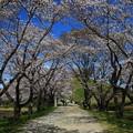 Photos: さきたま古墳公園 200325 02