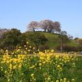 さきたま古墳公園 200325 05