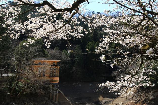 鎌北湖 200326 01