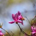 武蔵丘陵森林公園 春 140414 01