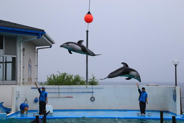 Photos: のとじま水族館 180517 09