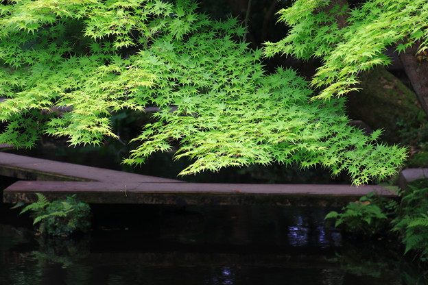 金沢 尾山神社 180518 07